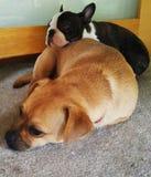 Sleepy friends Royalty Free Stock Photos