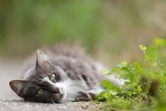 Sleepy grey cat enjoying Stock Images
