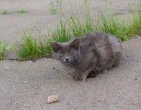 Sleepy homeless cat Stock Photography