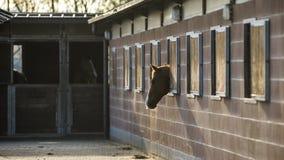 Sleepy horse. Out of the barn window Stock Photos