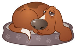Sleepy Hound Dog. Vector cartoon illustration of a sleepy hound dog lying on a paw print dog bed stock illustration