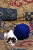 Sleepy kitten Stock Image