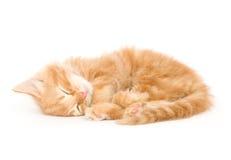 Sleepy kitten Royalty Free Stock Images