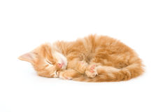 Sleepy kitten Stock Photos