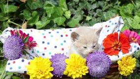 Sleepy kitten in basket stock video footage