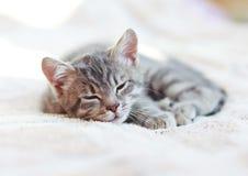 Sleepy Kitten Stock Photography