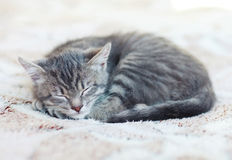Sleepy Kitten Royalty Free Stock Images