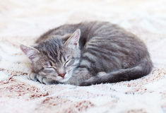 Sleepy Kitten Royalty Free Stock Photos