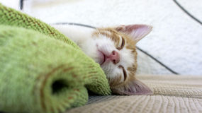 Sleepy kitten on a blue and green towel Royalty Free Stock Image
