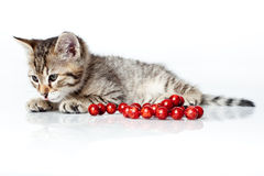 Sleepy kitten with red beads Royalty Free Stock Images