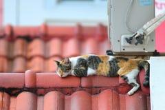 Sleepy Kitten Stock Images