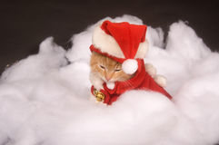 Sleepy kitten in a santa costume Stock Images