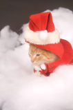 Sleepy kitten in a santa costume Royalty Free Stock Image