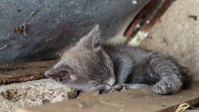 Sleepy kitten. Sweet dreams little fellow Royalty Free Stock Images