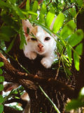 Sleepy kitten on a tree Stock Photography