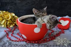 Sleepy kittens in the holiday atmosphere Stock Photography