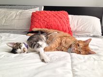 Sleepy kitties Stock Photography