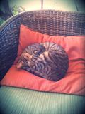Sleepy Kitty. Kitty asleep on the couch