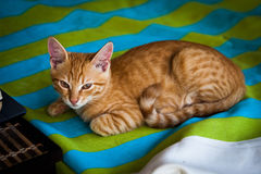 Sleepy kitty. Ginger and cute Royalty Free Stock Photo