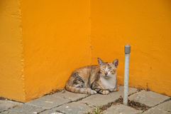 Sleepy little cat sitting next to bright yellow wall Royalty Free Stock Images