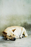 Sleepy Lonely Dog Stock Photography