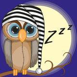 Sleepy owl Stock Photography