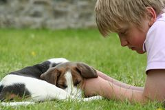 Sleepy puppy. Tierd beagle puppy rest his head on the boys hand and falls asleep after running about in the garden Royalty Free Stock Photo