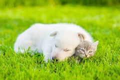 Sleepy puppy hugging small kitten on green grass Royalty Free Stock Photography