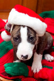 Sleepy Santa Dog. Puppy with sad face and Santa hat on Christmas blanket Stock Photos