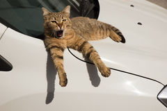 A Sleepy Stray Cat Laying Down on A Car Royalty Free Stock Images