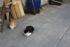 Sleepy stray cats. Black and white cat and ginger cat relaxing in fishing village, tai o Hong Kong Stock Photo