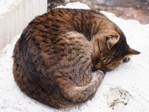 A sleepy Tabby - Cat. Cat sleep comfortably on a standstone Royalty Free Stock Photo