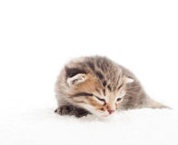 Sleepy tabby kitten Stock Photos
