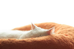 Sleepy White cat Royalty Free Stock Image