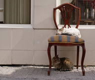 Sleepy white cat on vintage chair. tabby cat looking back under chair. Cat neighbors. cat couple. street cat friends Royalty Free Stock Images
