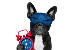 Sleepyhead  baby dog Royalty Free Stock Image