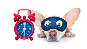 Sleepyhead dog Stock Images