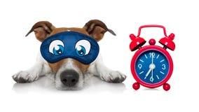 Sleepyhead dog Stock Photo