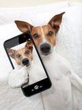 Sleepyhead selfie dog. Sleepyhead dog taking a selfie while in bed royalty free stock image