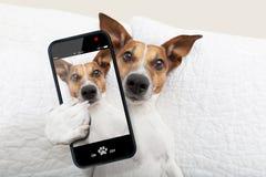 Sleepyhead selfie pies obraz stock