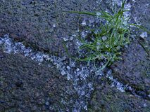 Sleet Crystals between Pavers Royalty Free Stock Photography