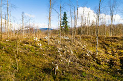 Sleet devastated forest. Mixed forest stand devastated after sleet Europe, Slovenia in 2014 Stock Photography