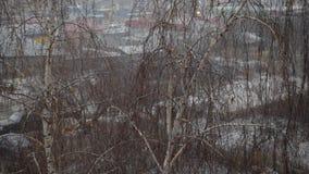 Sleeting in een stad op achtergrond van leafless berk stock videobeelden