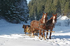 Sleigh con i cavalli fotografia stock libera da diritti