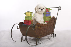 Sleigh dog Royalty Free Stock Image