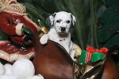 sleigh för valp s santa för 5 dalmatian Arkivfoto