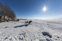 Sleigh on frozen Cilder lake, Ardahan, Turkey. Frozen Cildir lake in Ardahan, Turkey Royalty Free Stock Photo