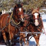 Sleigh Horses In Winter Stock Photos