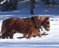 Sleigh Horses In Winter Royalty Free Stock Image