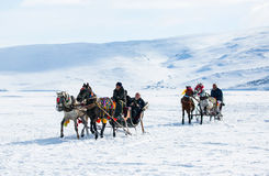 Sleigh pulled by a horse in lake frozen cildir. Royalty Free Stock Photo